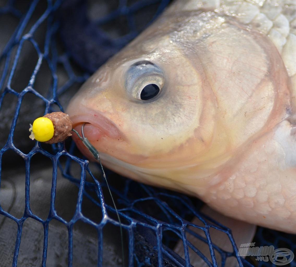 A kivétel erősíti a szabályt! Ugyanis ezen a napon a legkisebb és a legnagyobb halamat is ezzel a végszerekkel fogtam