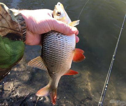 A 2019. év legszebb fogásai 2. rész – egyéb halak - Szavazz az év fogására!