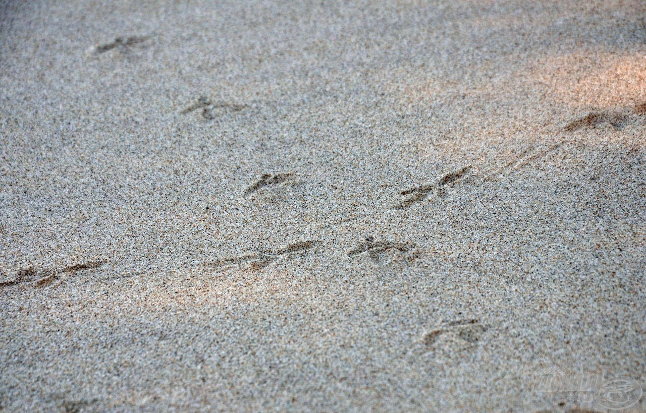 Azt nem mondhatjuk, hogy ott, ahol a madár se járt, mert szemmel láthatóan jártak itt madarak… :)