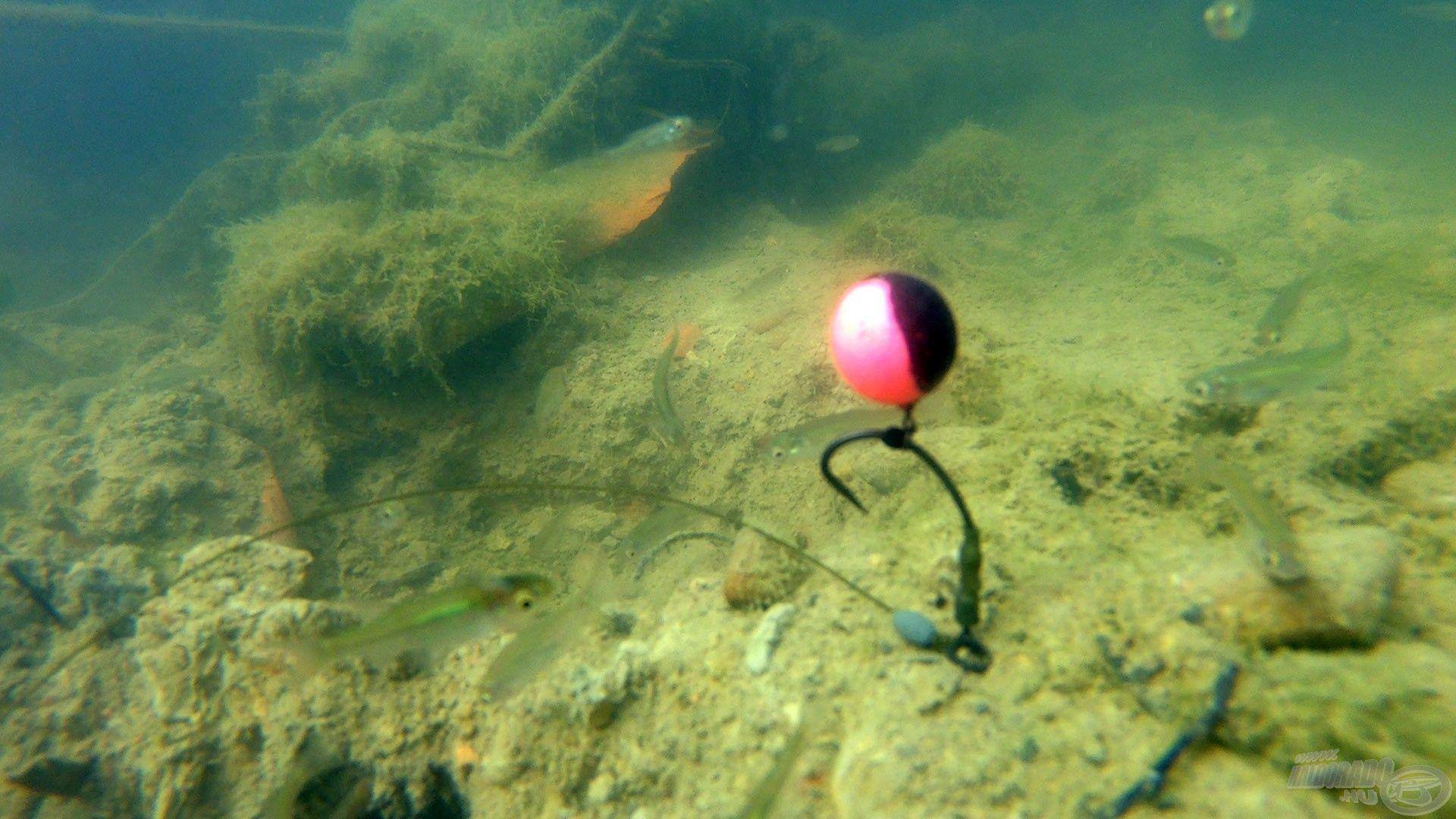 A szerelék vízben felvett megfelelő pozíciója