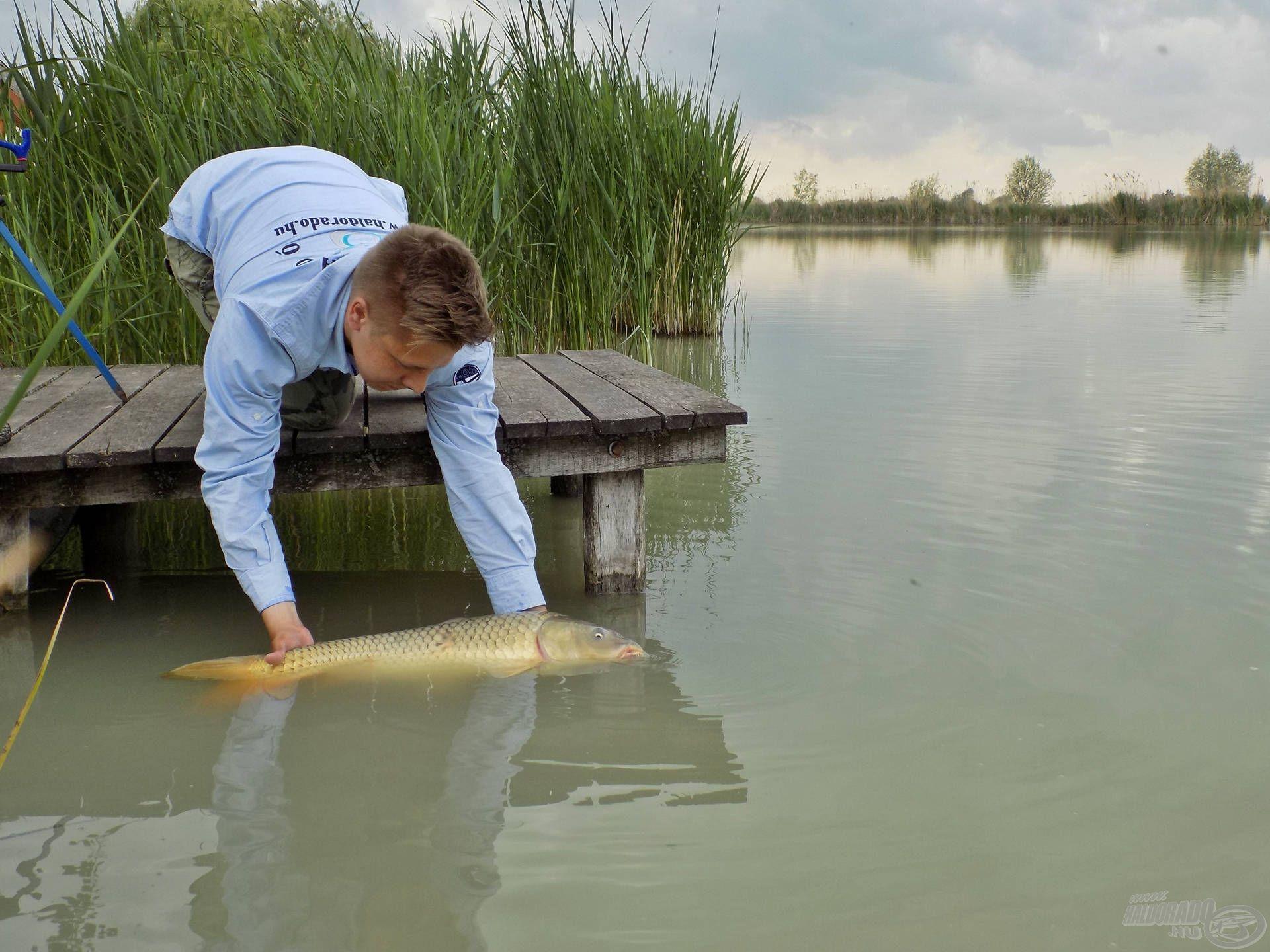 Minden fárasztás-szákolás-fényképezés ezzel a mozdulattal ért véget. A halak védelme nem kis felelősség, mindig várjuk meg, ameddig erőre kapnak kezeink között