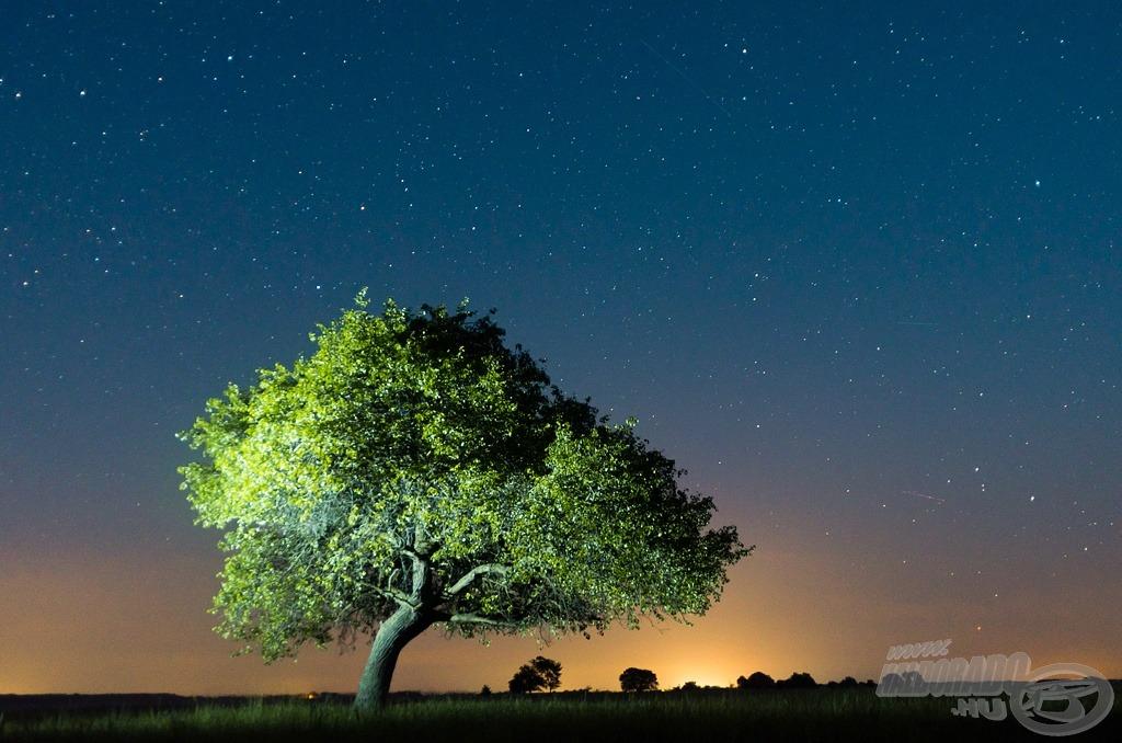Egy körtefa éjszakája