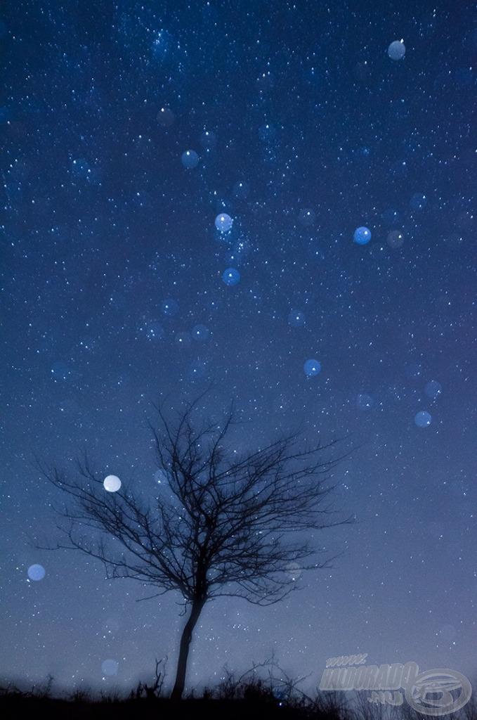 Csillagseprű