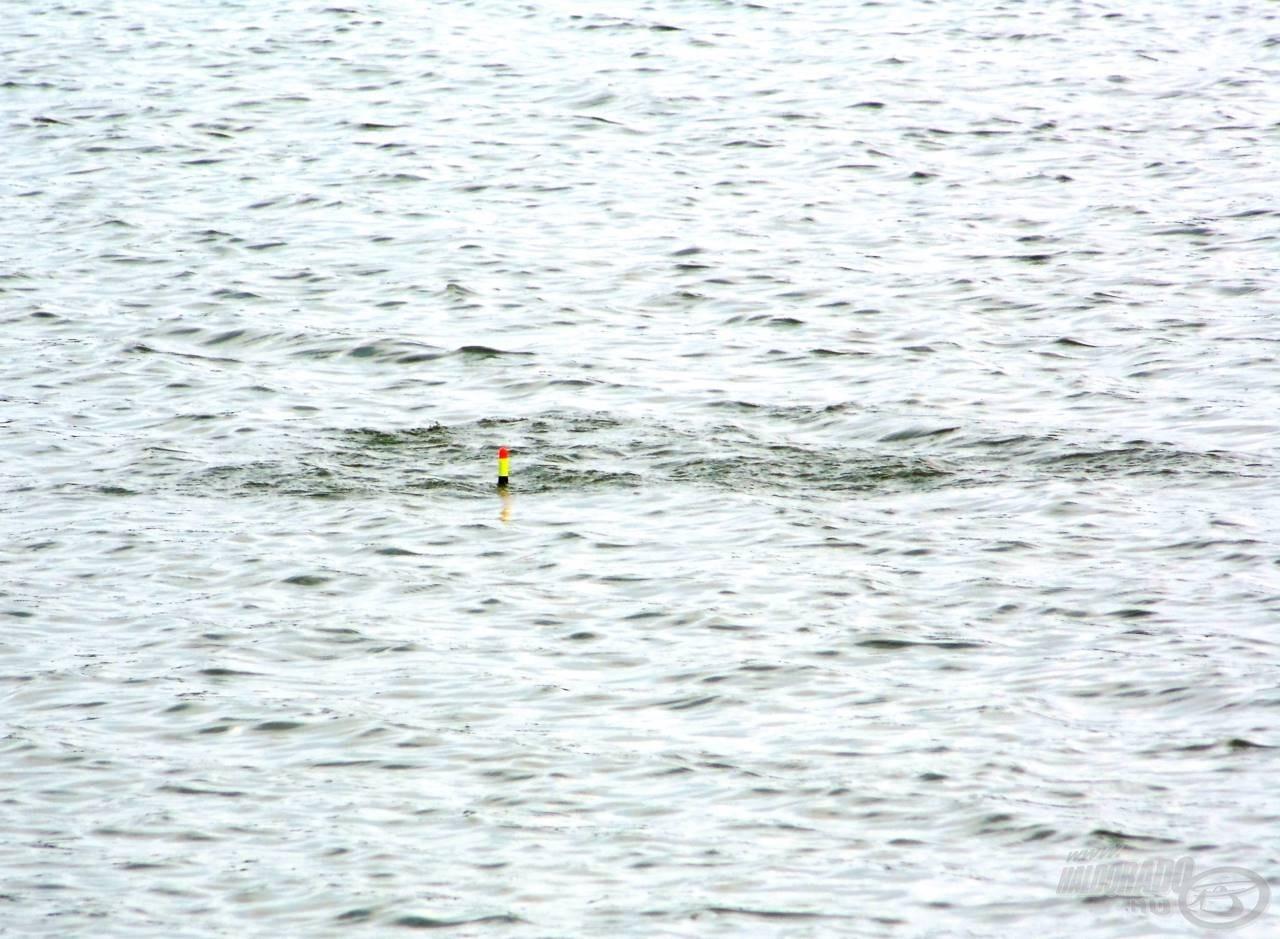 Jellegzetes kapás előtti pillanat: az apróhalak szétspriccelnek a nagyobb hal elől! A következő másodpercben már nincs ott az úszó!