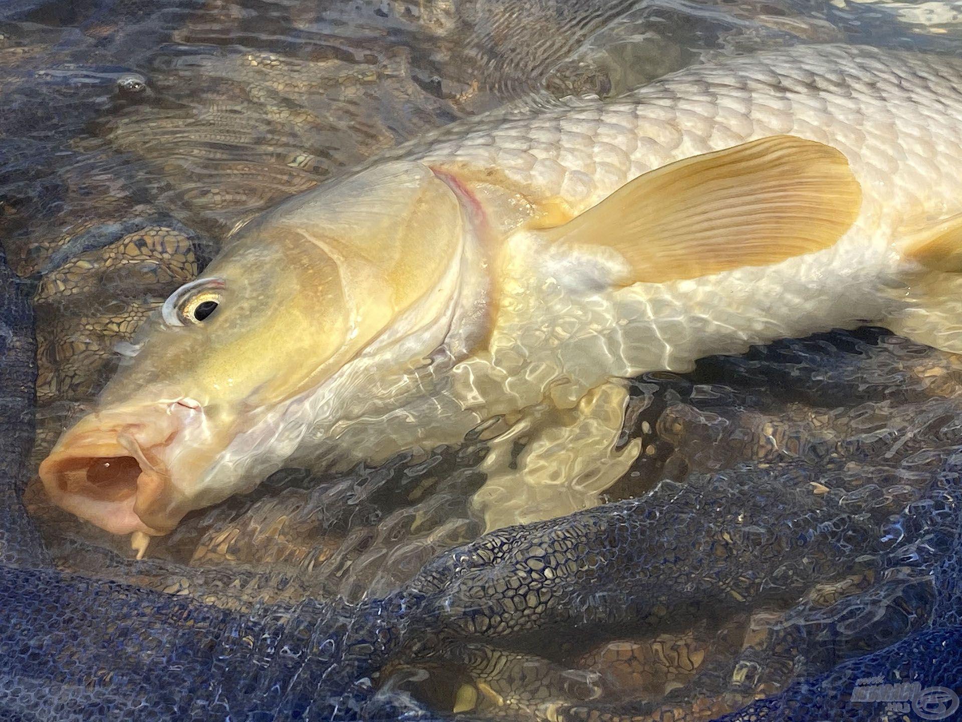 A halakkal való kíméletes bánásmód természetesen itt is KÖTELEZŐ!