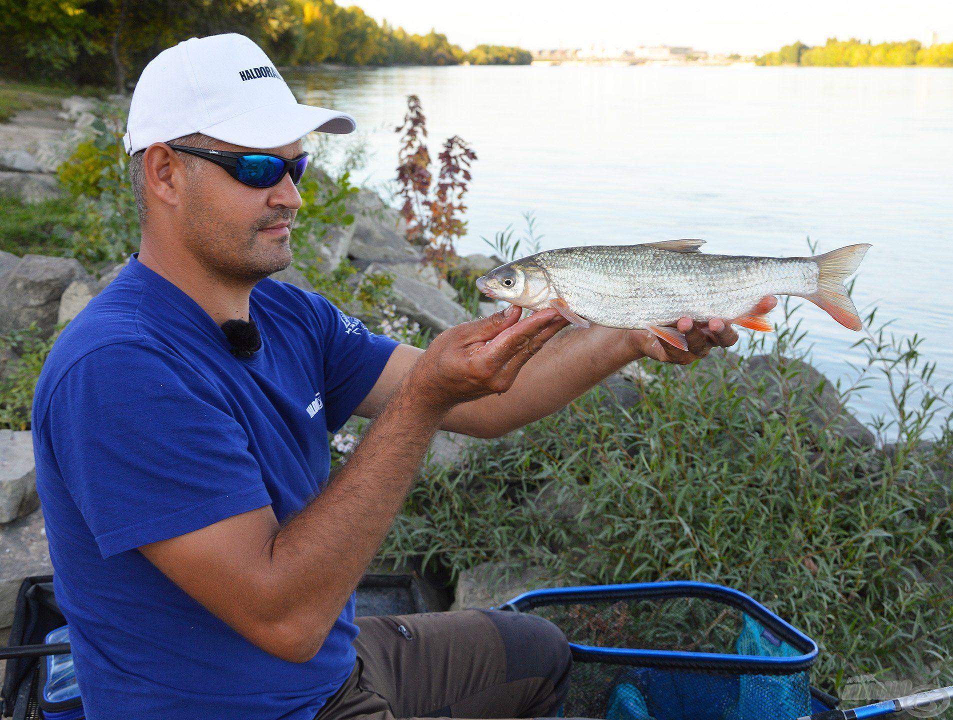 A folyóvízi halak is nehezen bírják a rabságot, csak akkor tartsuk meg, ha el is visszük őket