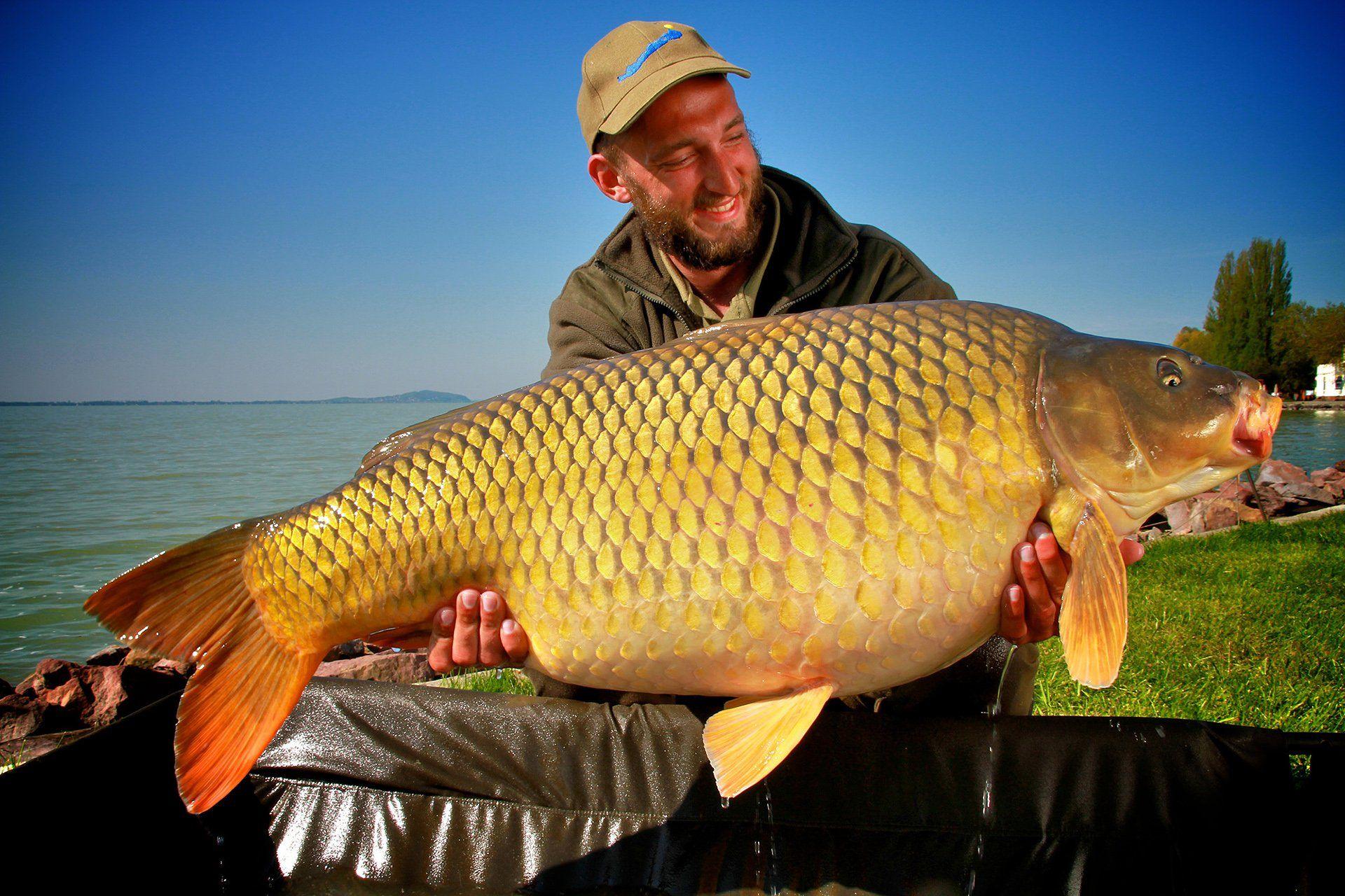 Tulipán Tibor és csapattársai értékes szakmai segítséget nyújtanak bárkinek, aki a magyar tengeren készül nagy pontyokra horgászni!