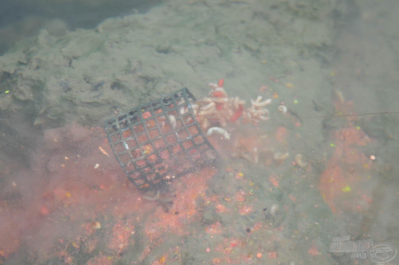 Mikor az áramló víz kimossa az etetőanyagot, a csonti robbanásszerűen szabadul ki a kosárból