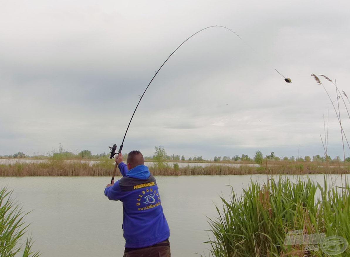 A siker kulcsa a pontos horgászat. A szemközti nádas elé pontosan bevetett végszerelék hamar gazdára talál…