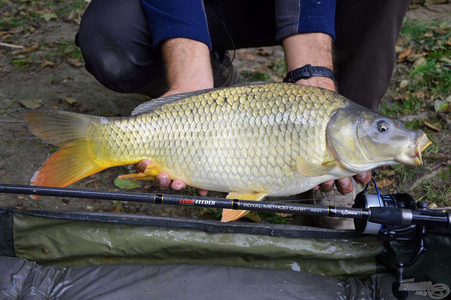 Termetes halak horgászatához is alkalmas ez a bot, de megállja a helyét gyors, pörgős, versenyszerű method horgászat közben is, ahol átlag méretű halakból kell sokat és nagy biztonsággal megfogni
