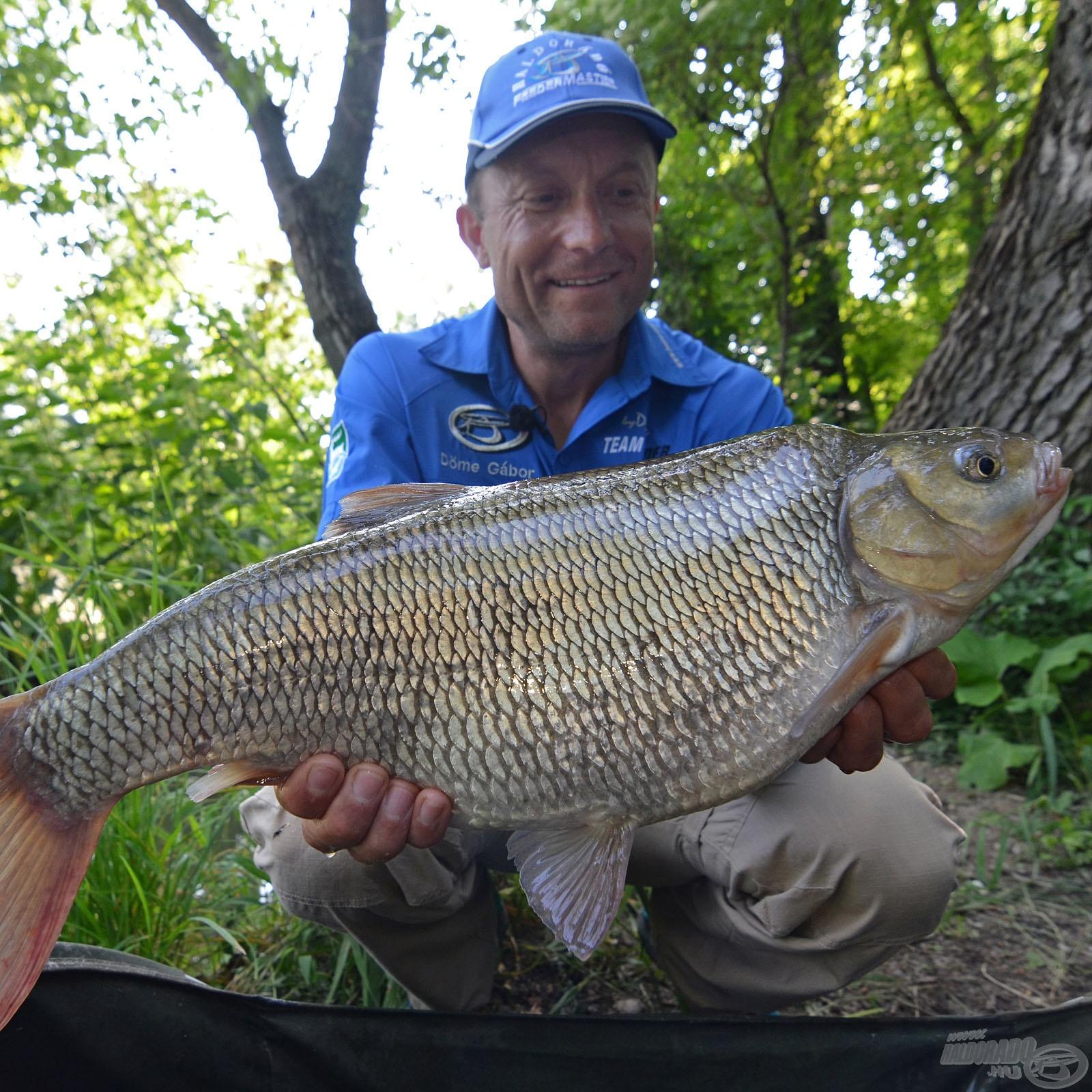 Rekordlistás 'egyéb' halak