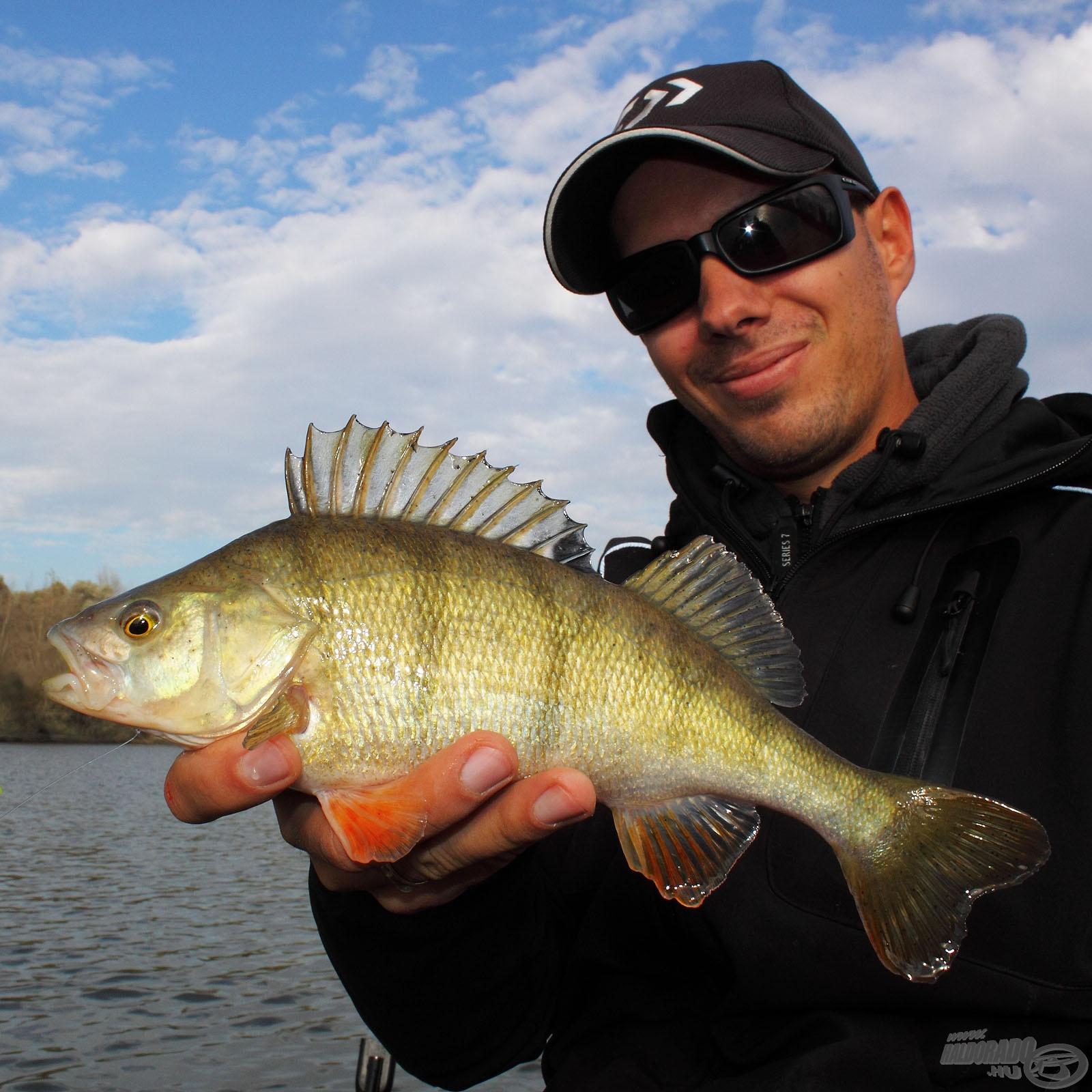 Sügér horgászat