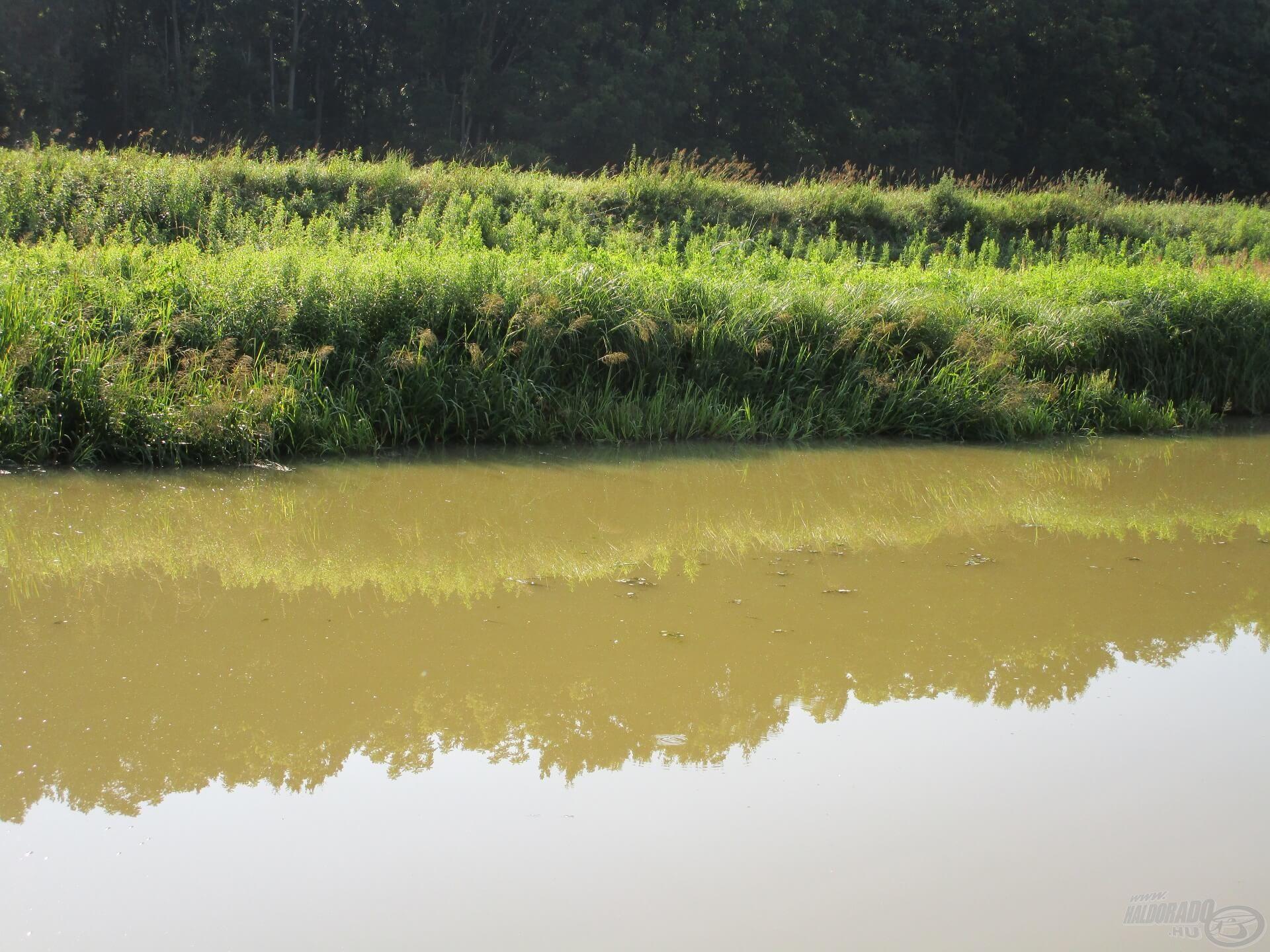 Egy komolyabb nyári zápor hatására egyből bezavarosodik a víz