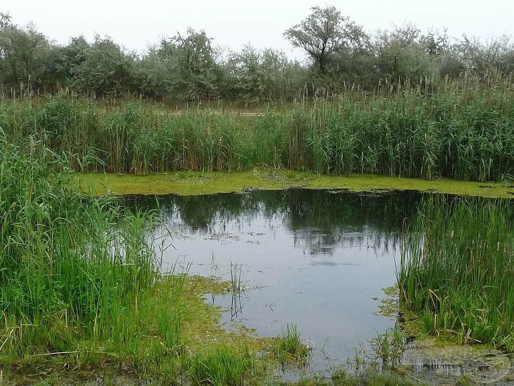Overgrown - vízi növényzettel gazdagon benőtt