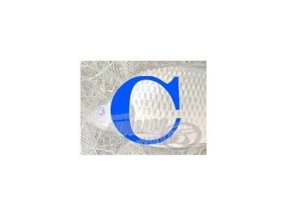 """Angol-magyar horgászszótár 3. rész """"C"""""""