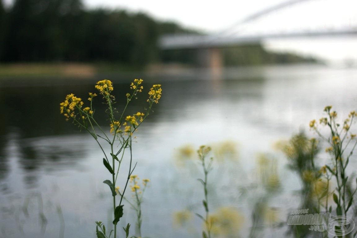 Híd, virágok, Tisza…