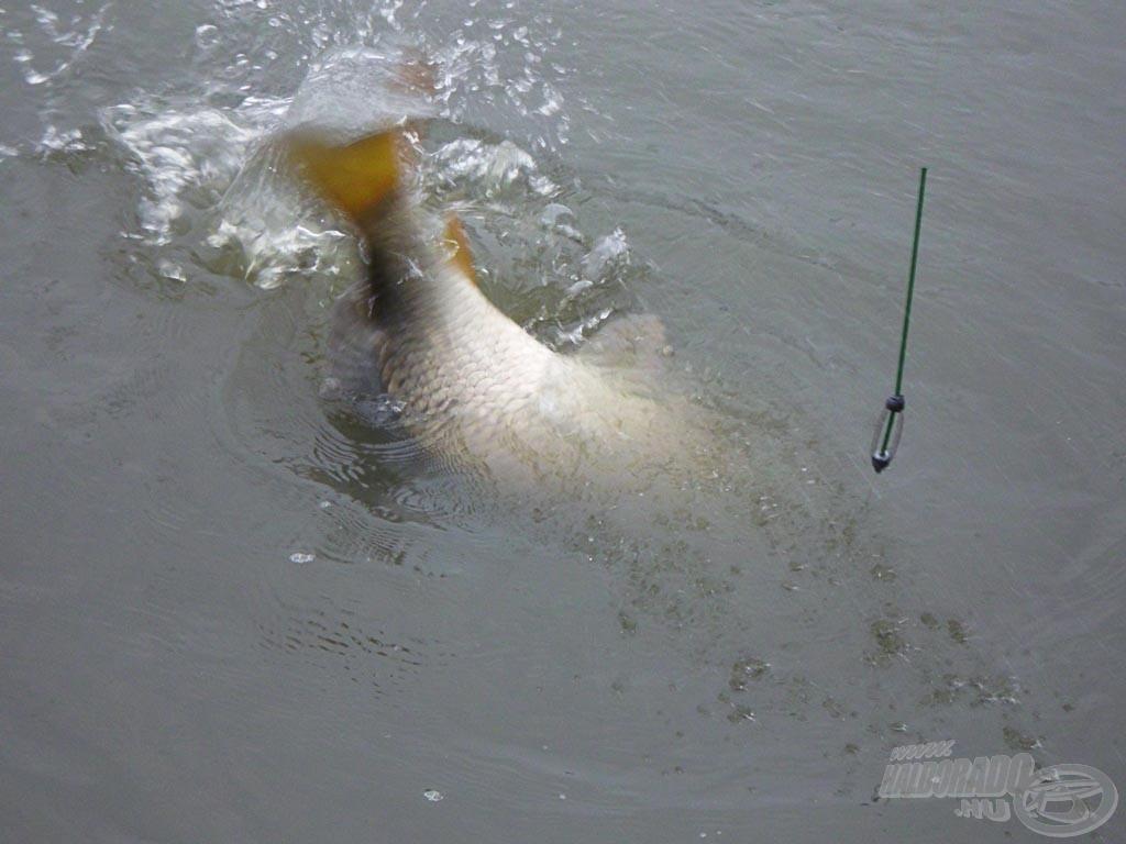 A hevesen küzdő hal próbára tette Alexát