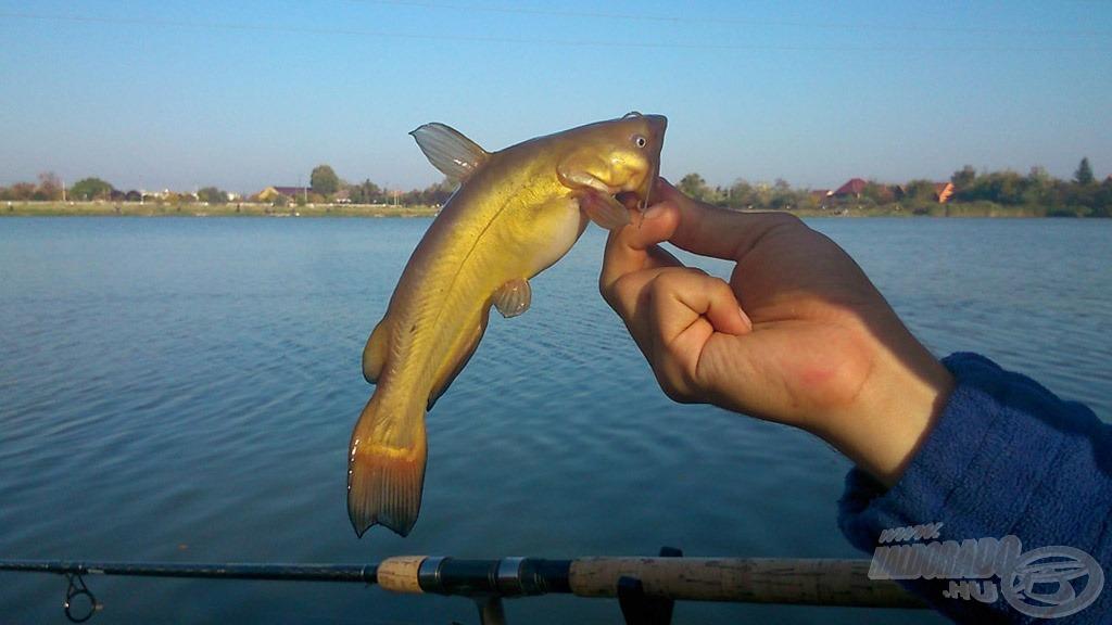 A horgászat első szakaszában a törpékkel kellett harcot vívnom, pontosabban a kikerülésükkel