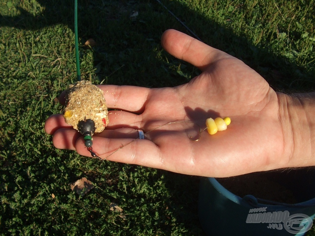 Haldorádó Vad Ponty etetőanyag és a hozzá illő kukorica fűzve, hungarocell golyóval