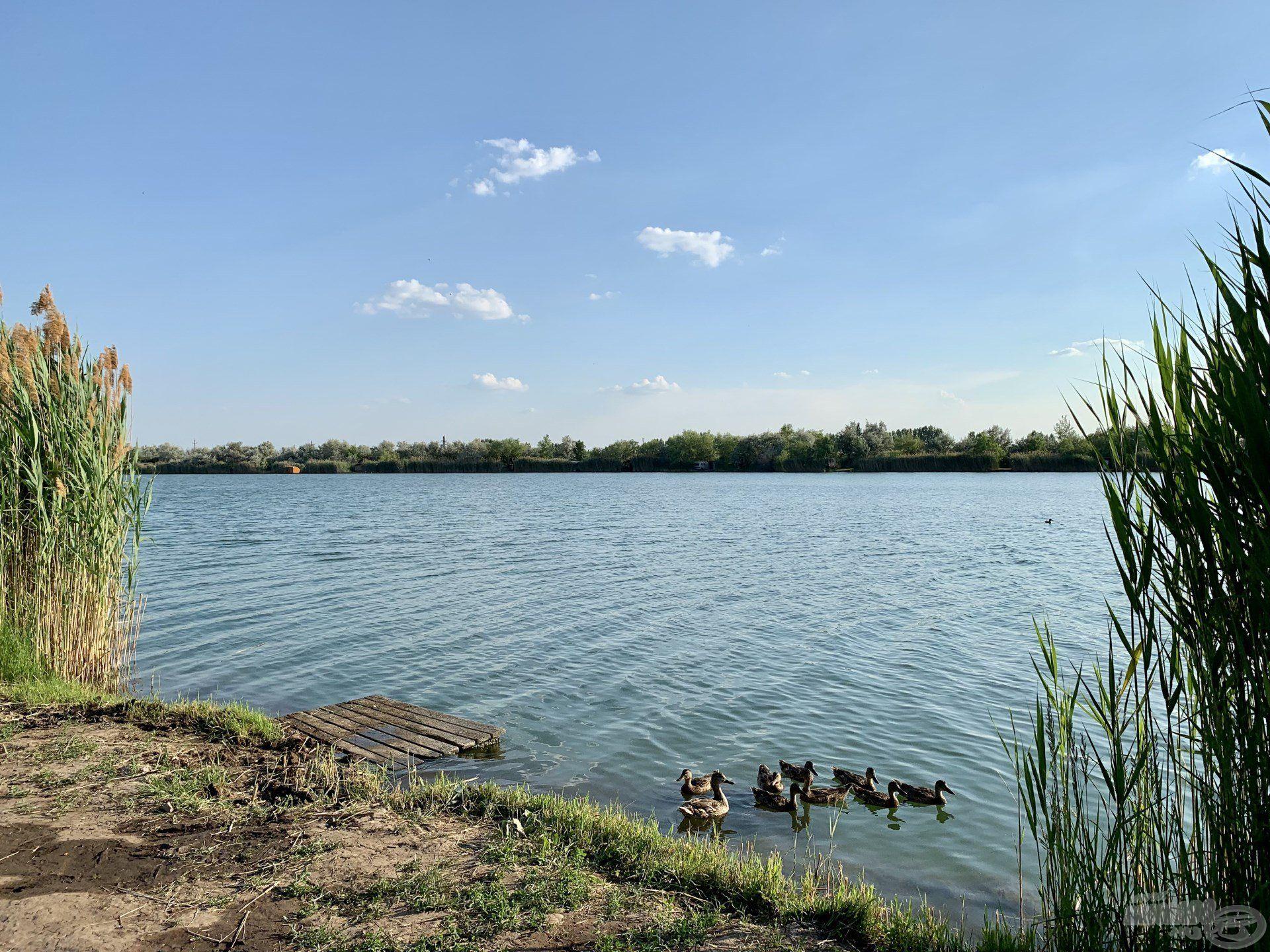 Kedvenc vízterületem, a Csaba-tó az utóbbi években teljesen átalakult, megváltozott…