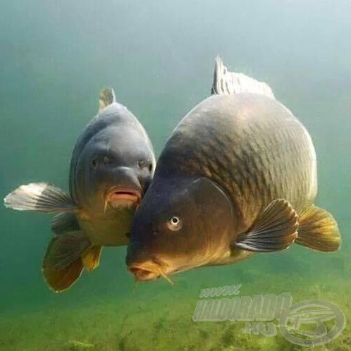 Ők várják jövőre a legkevésbé a horgászokat