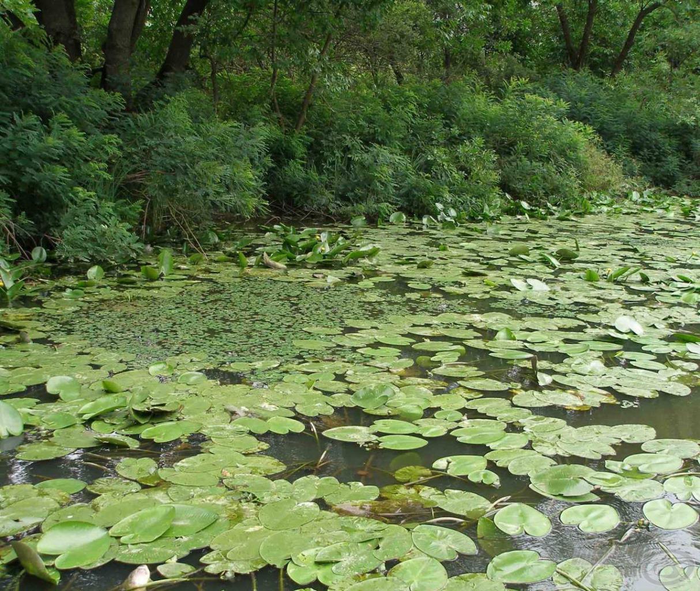 Van, ahol még sűrű a vízitök mező, itt felszíni békaimitációkkal lehetünk eredményesek