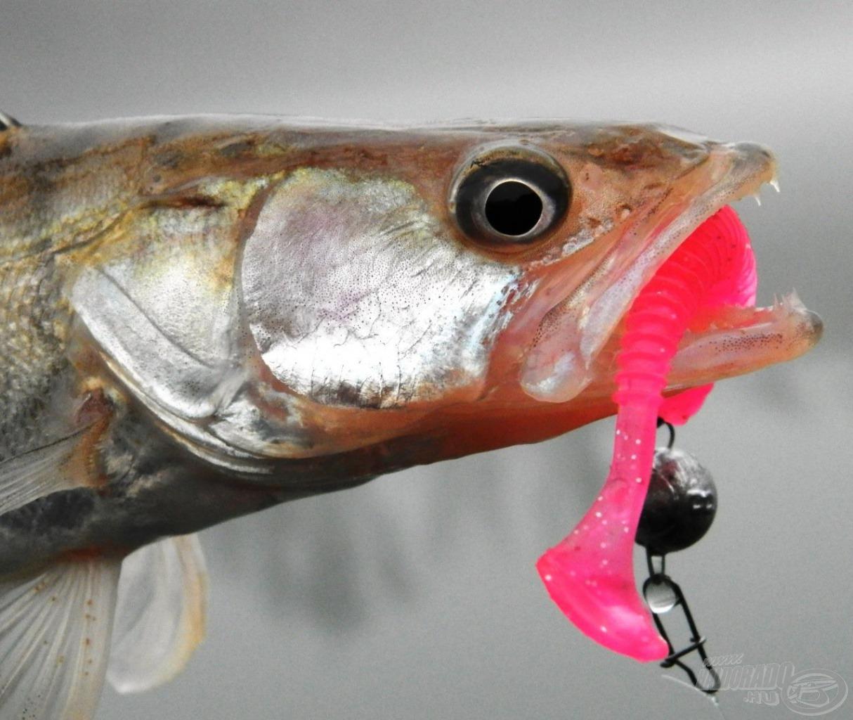 … és az elmúlt év új kedvence: a Nevis Longer gumihal