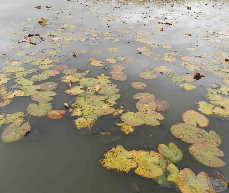 Van olyan tó, ahol még novemberben is fenn van a vízitök a felszínen