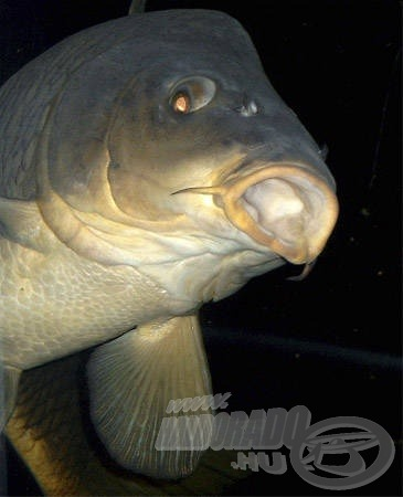 Nagyobb méretű akváriumban akár kedvenc halainkkal is nap mint nap találkozhatunk