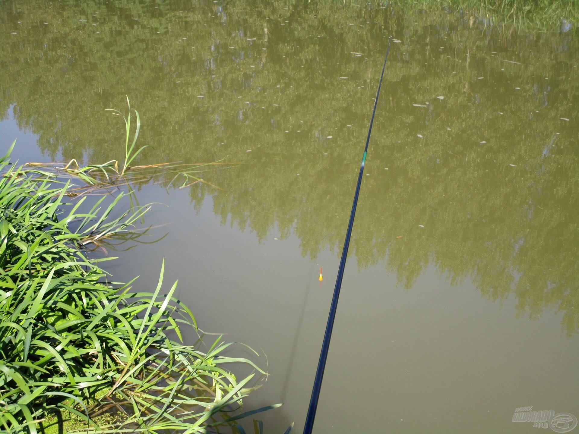 A vízi növényzet környéke jó haltartó hely