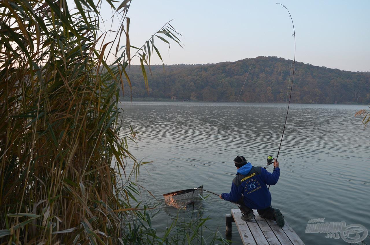A 2,75 Lbs tesztgörbéjű botok remekül küzdöttek a termetes halakkal