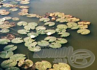 A víz tükrét néhol gyönyörű tavirózsák ékesítették