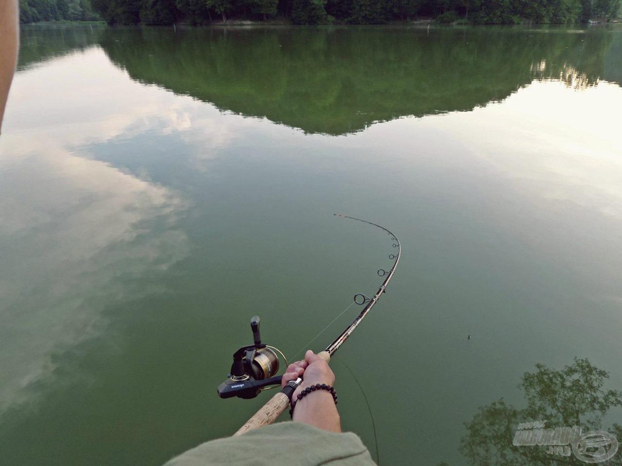 Igazán jó erőben voltak a halak - ez talán a felmelegedett víznek is köszönhető , de ez alapjában is jellemző ezen a tavon