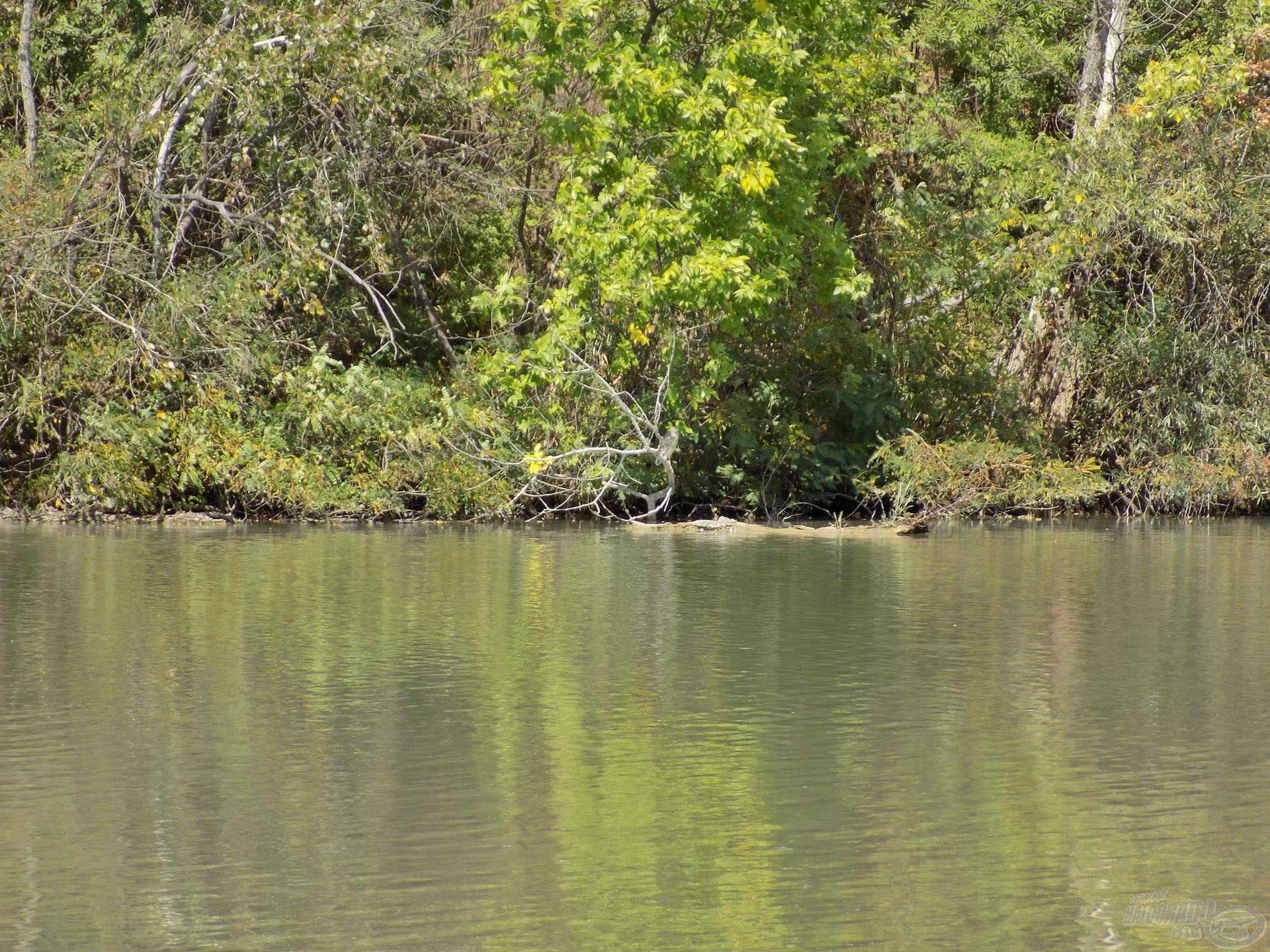 Bokrok, bedőlt fák, sűrű növényzet. Csendet, nyugalmat, táplálékot jelentenek a halak számára az ilyen helyek. Az egyik végszerelékünket mindenképpen érdemes a túlpart közelében elhelyezni