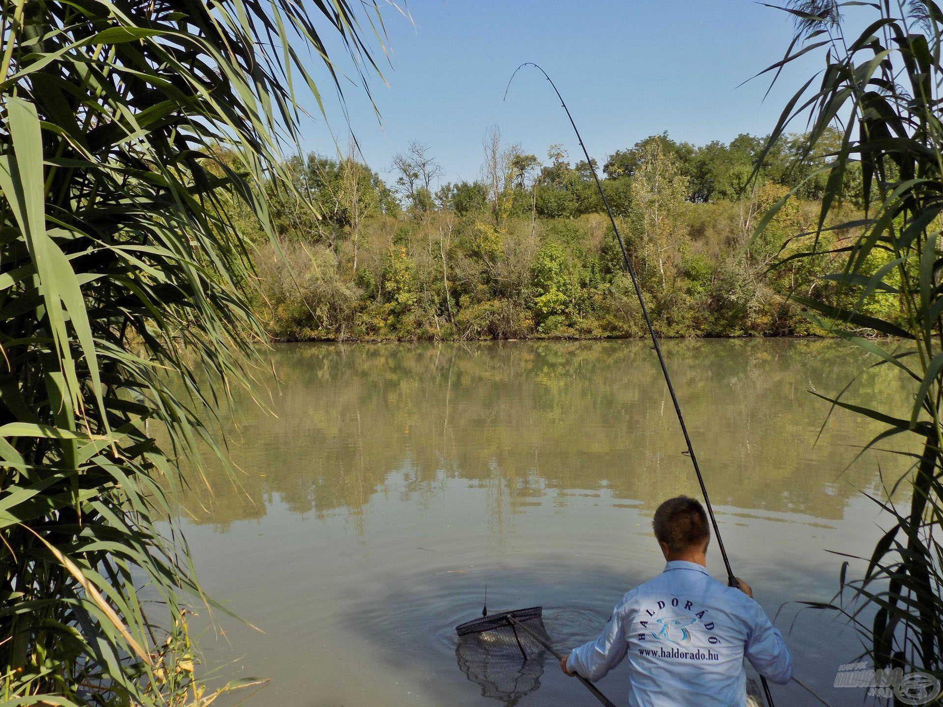 Miután a stratégiát és az etetőanyagokat bemutattam, nincs más dolgunk, mint hogy élvezzük a horgászatot. A helyesen megválasztott módszernek köszönhetően szinte folyamatosan fárasztottam-szákoltam…