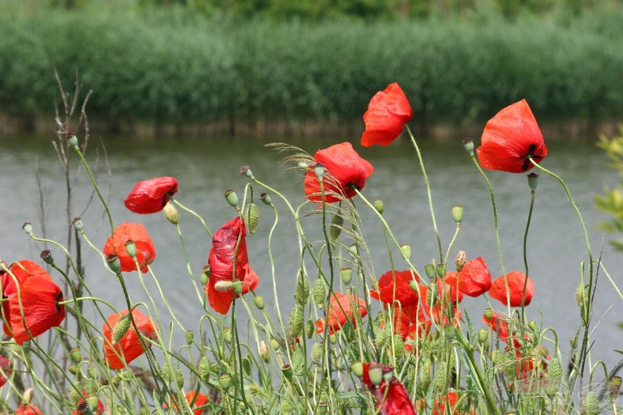 Nyáron színes virágok teszik változatossá a gazdag növényvilágot