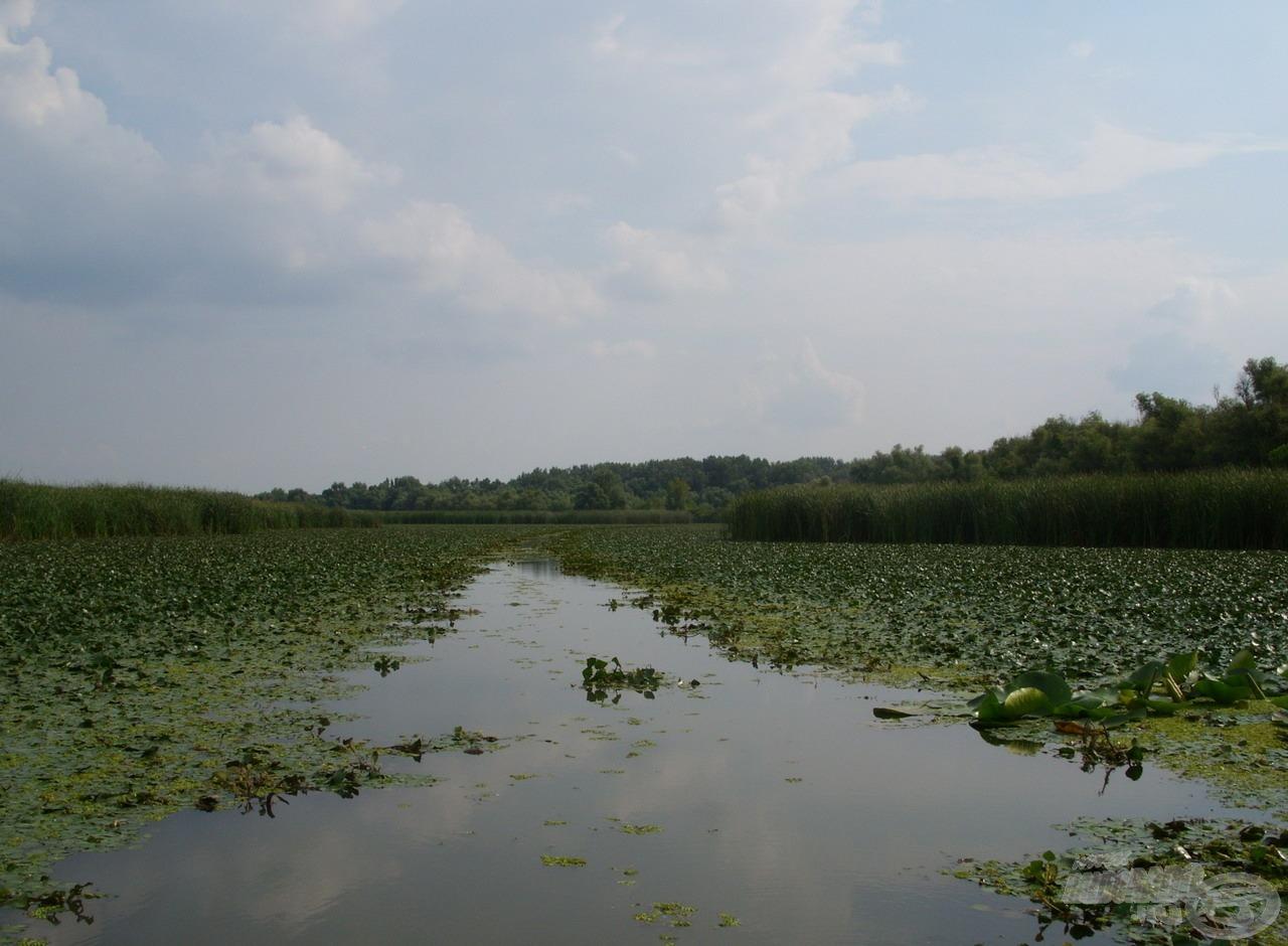 A Tisza-tó több mint felét növényzet borítja, amibe olykor saját magunknak kell csapást kialakítanunk az áthaladáshoz