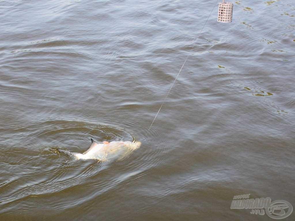 Az első halamra mindössze 4 percet kellett várni