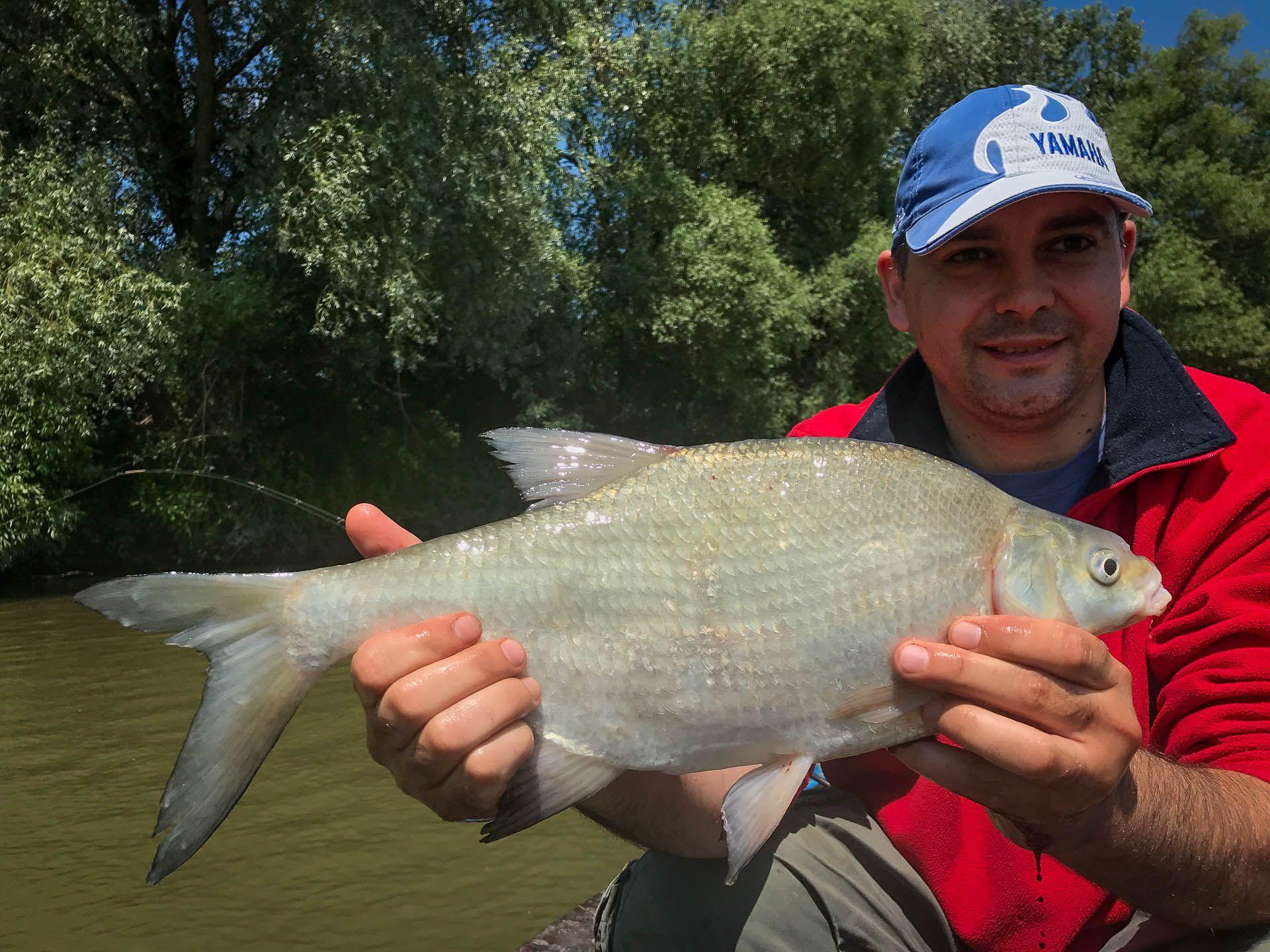 Barátom is jelezte, hogy jó hala van, mégpedig egy 1,35-ös dévér képében