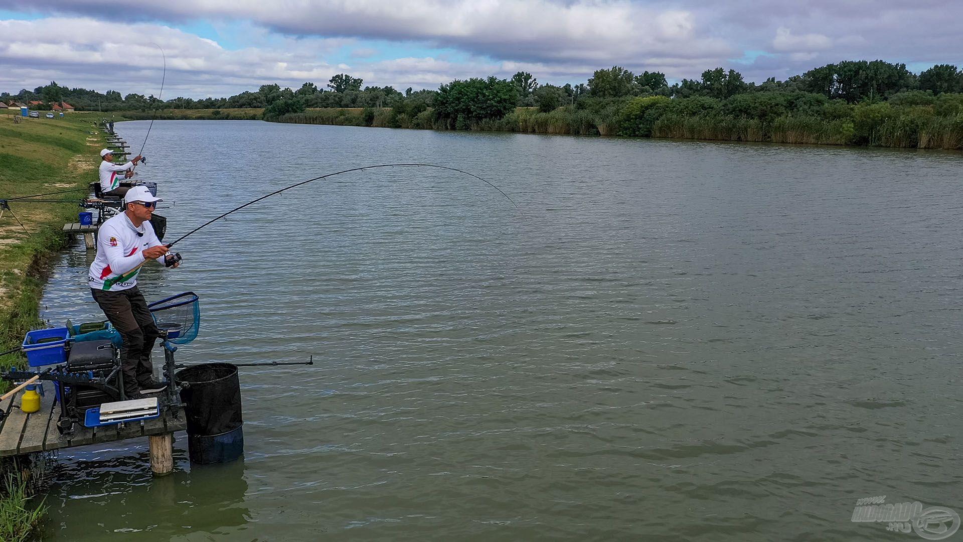 Előbb-utóbb megjelennek a termetesebb halak az etetésen, csak ki kell őket várni