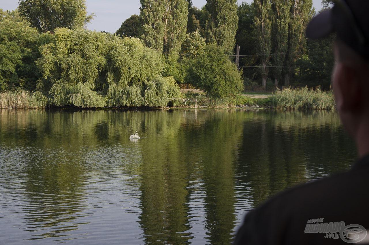 A kitűzött távolsággal majdnem a Duna-ág közepét horgásztam meg. Helyi horgászok elmondása szerint a nagyobb testű halak itt tartózkodnak
