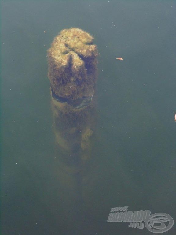 … és horgászszemmel nézve ijesztően tiszta!
