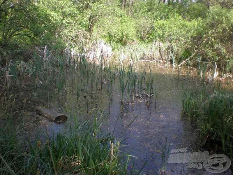 Ehhez hasonló lápos-mocsaras környék övezi a Szilas-patak torkolatát, e terület élővilága miatt élvez természetvédelmi oltalmat a tározó környéke
