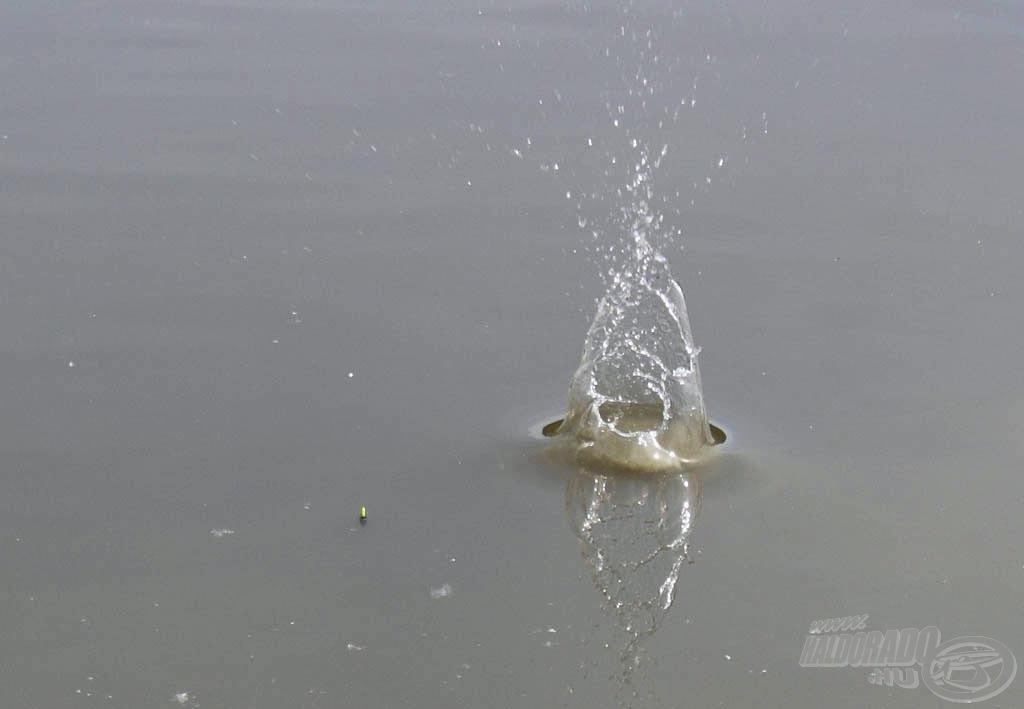 Némi gyakorlás után egyre közelebb kerülnek a gombócok az úszóhoz