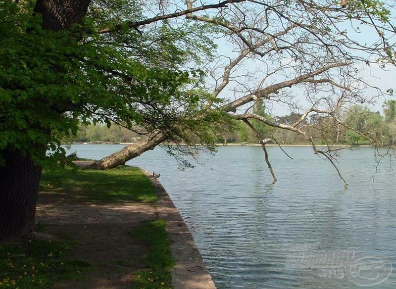 A szinte vízszintesen növő fák