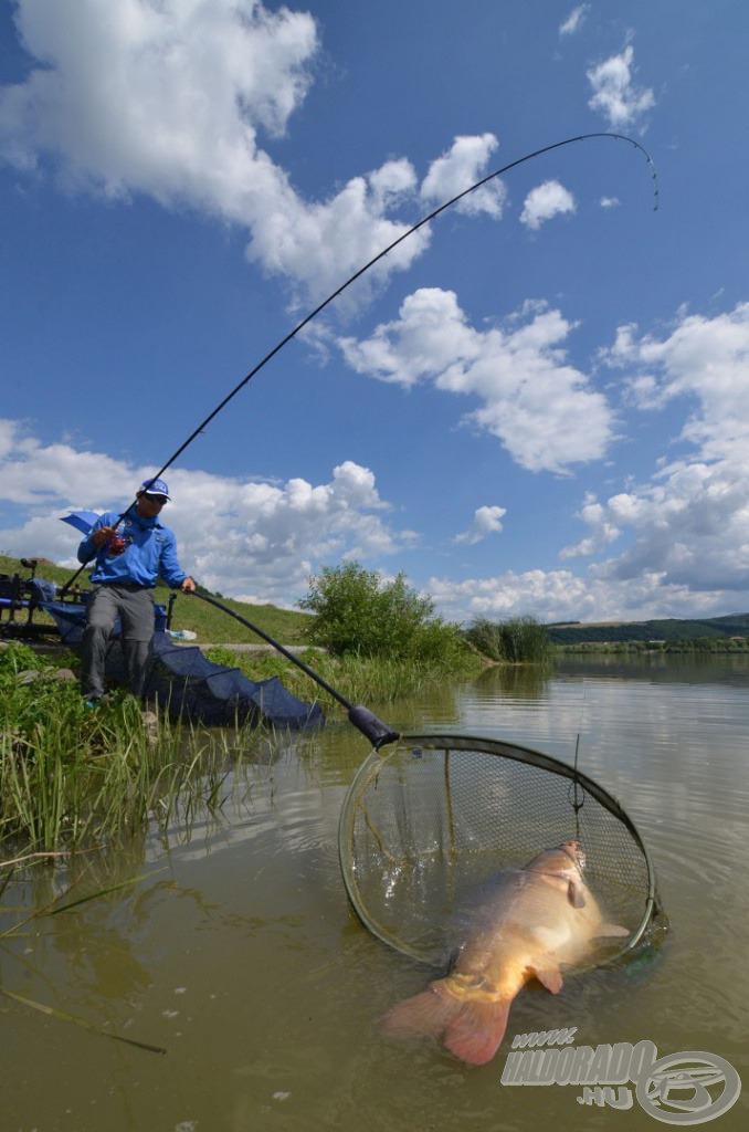 Mind a hétköznapi horgászatok, mind a versenyek során számos termetes hal igazolta a keverék fogósságát