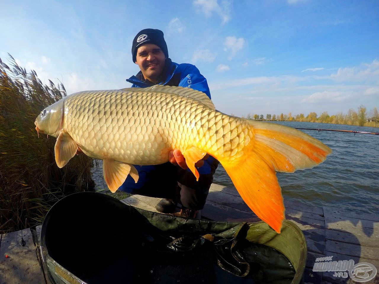 Sipos Gábor fantasztikus halakat csalt horogra ezzel a pellettel…