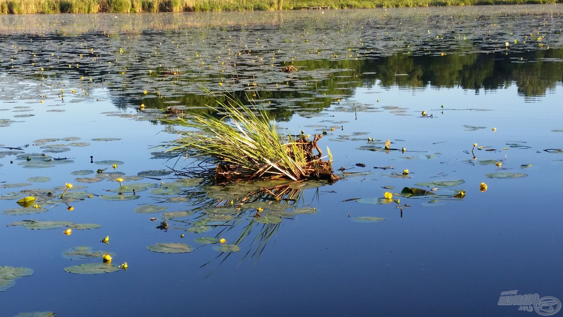 Az úszó zsombékok nagyon jó kiindulási pontok a nappali horgászatokhoz
