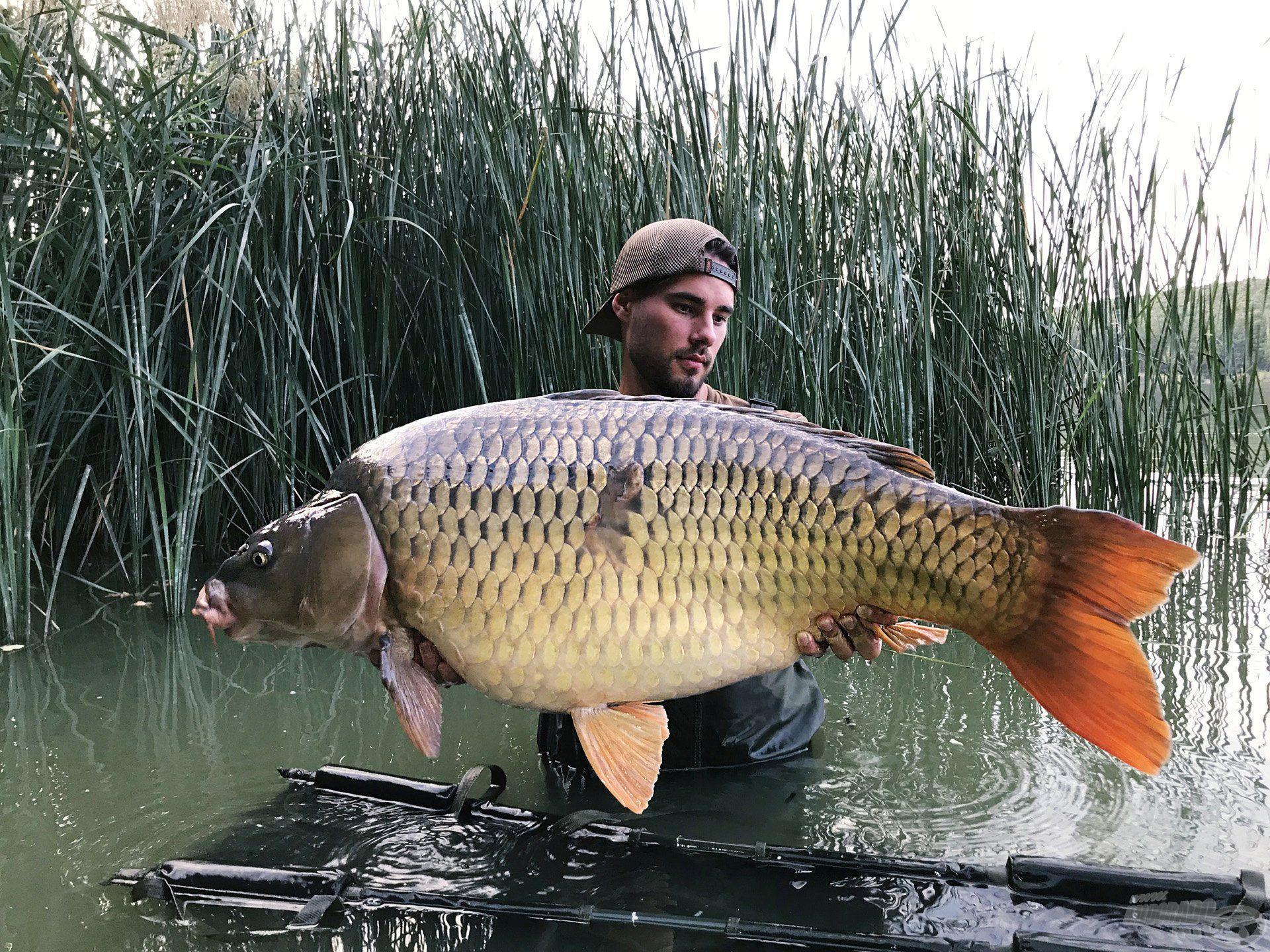 A második nap sem telt el 20+-os hal nélkül, itt egy 24,52-kg harcost tarthatok a kezeimben