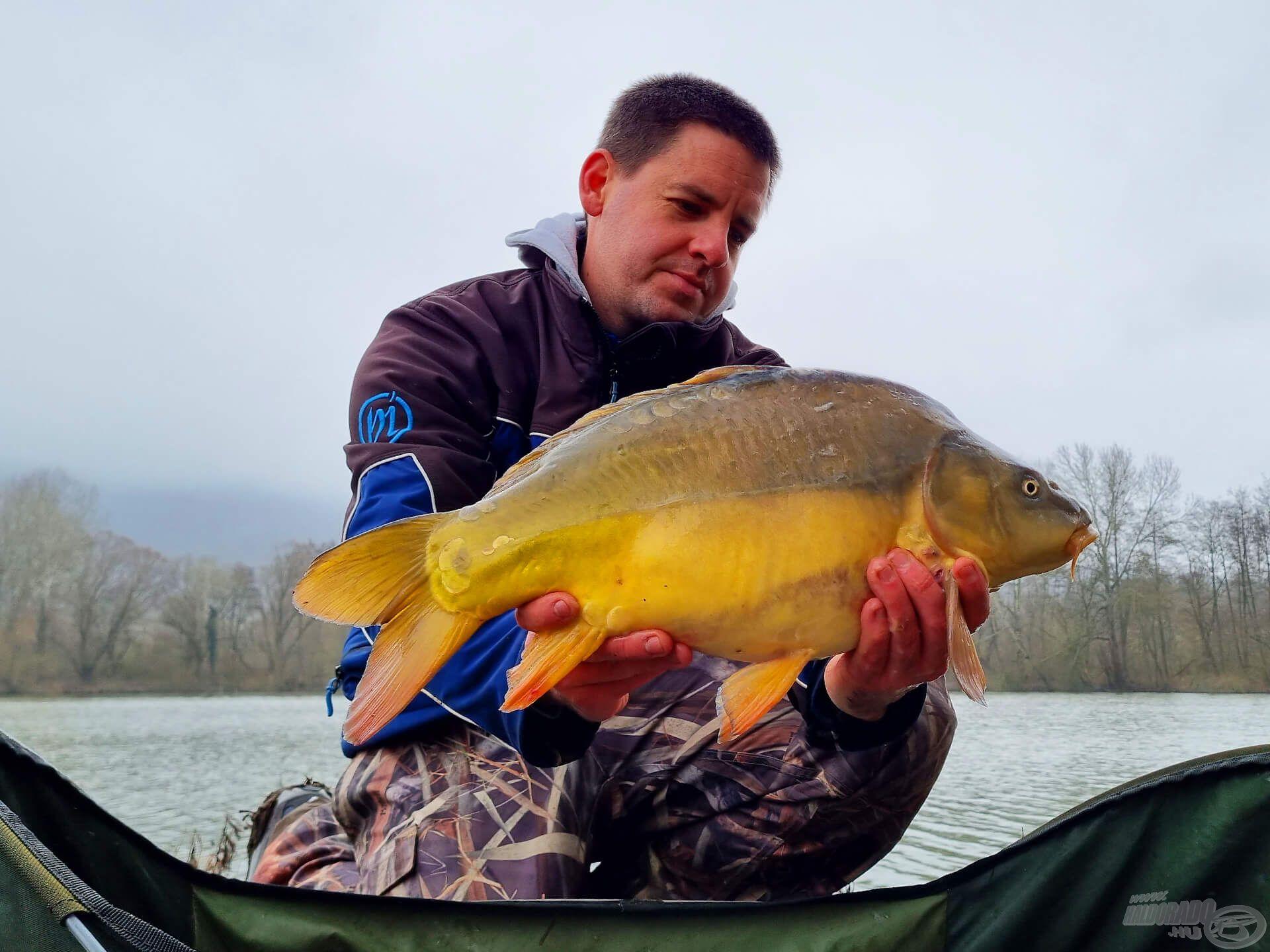 Vándorló horgászat nélkül ő sem kerülhetett volna lencse elé. A letisztult, hideg vízben elképesztően sárga színben pompáznak a tükrösök!